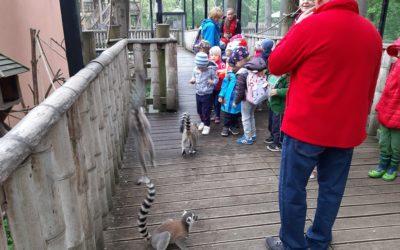Egy vidám nap a nyíregyházi állatkertben